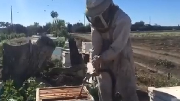 Un apicultor con mala suerte - Sputnik Mundo