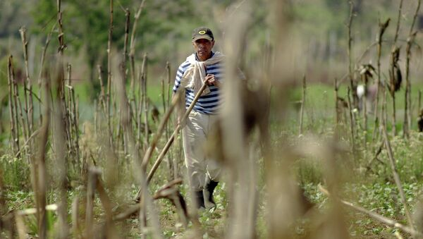 Agricultor de Guatemala - Sputnik Mundo