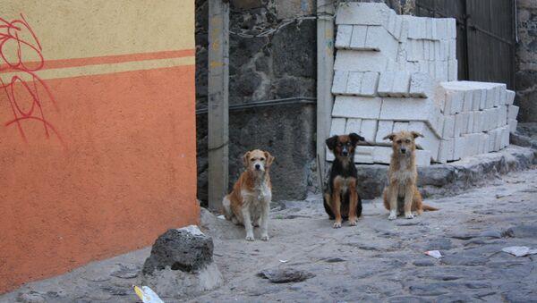 Tres perros callejeros - Sputnik Mundo