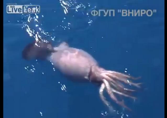 El ataque de un calamar gigante