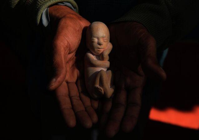 Modelo de un feto