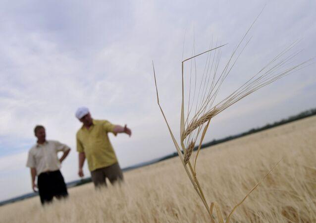 Sequía en Rusia (Archivo)