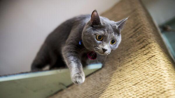 Gato (Archivo) - Sputnik Mundo
