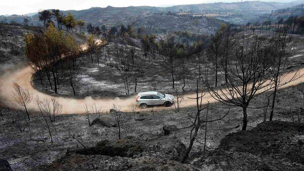 Arboles quemados en un incendio forestal en Sant Salvador de Guardiola, Cataluña, el 27 de julio, 2015 - Sputnik Mundo