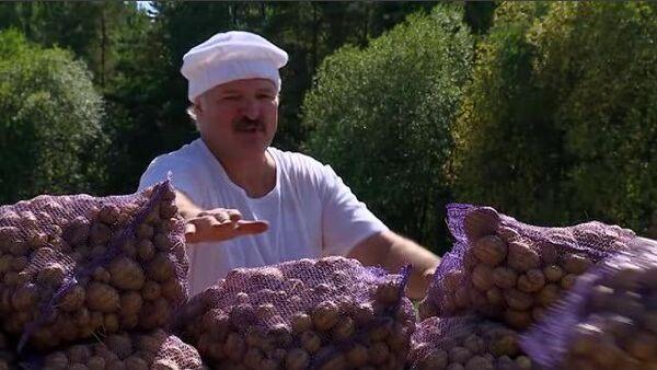 Presidente de Bielorrusia, Alexandr Lukashenko, recolectó este domingo con su hijo las patatas en el territorio de su residencia oficial - Sputnik Mundo