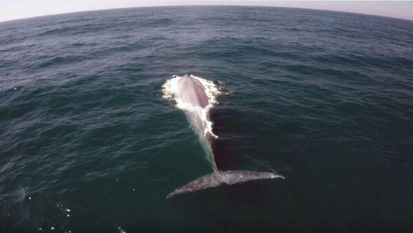 """Una ballena se cuela en el reportaje sobre ballenas """"invisibles"""" - Sputnik Mundo"""