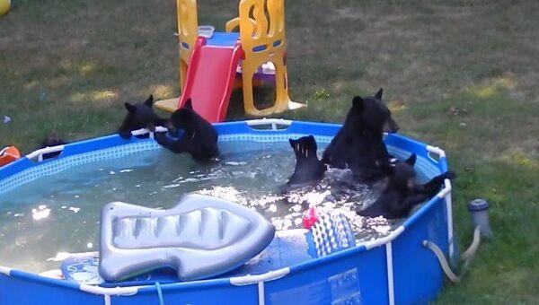 Una camada de oseznos invade una piscina infantil - Sputnik Mundo