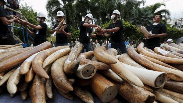 Marfil de contrabando descaminado en Tailandia - Sputnik Mundo