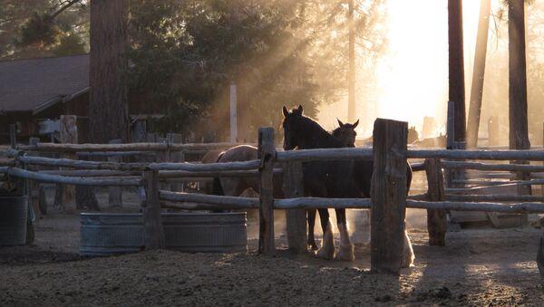 Decomisan ranchos y una cuadra de caballos de raza a cartel de Los Zetas en México - Sputnik Mundo