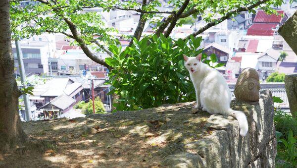 Un gato en la ciudad japonesa de Onomichi - Sputnik Mundo