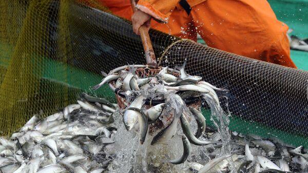 Pesca en la región de Cheliabinsk, Rusia - Sputnik Mundo