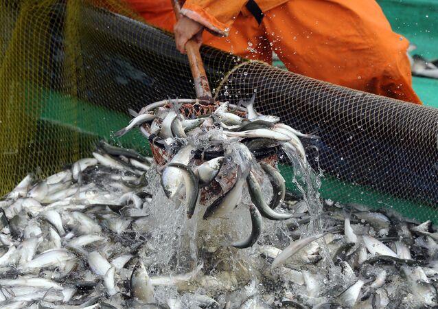 Pesca (Archivo)