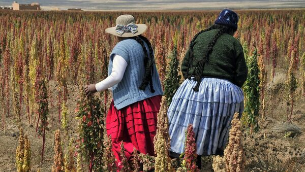 Bolivian Aymara natives walk in a Quinoa plantation during a visit to the so-called Quinoa Route in the Bolivian Andes, on April 8, 2013 in the Tarmaya community, 120 km south of La Paz. - Sputnik Mundo