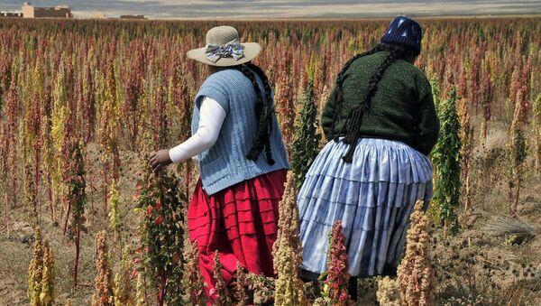 Mujeres campesinas bolivianas - Sputnik Mundo