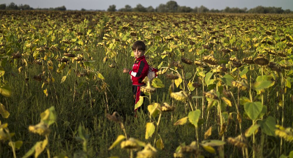 Niño refugiado sirio cerca del campo de refugiados húngaro Röszke
