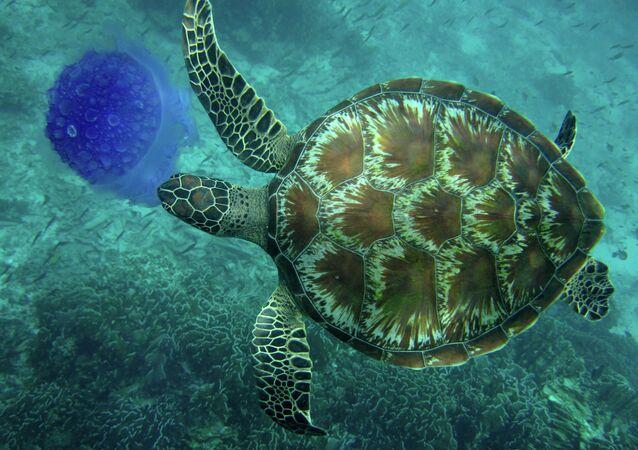 Tortuga marina (imagen ilustrativa)