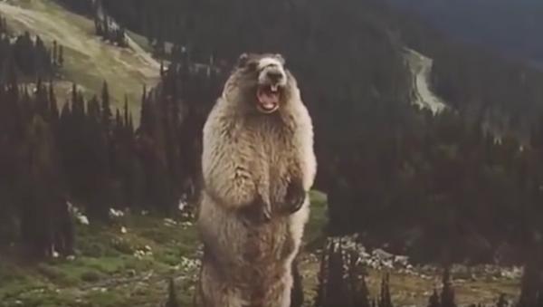 El grito de la marmota - Sputnik Mundo