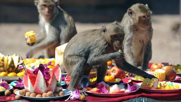 Macacos en Bangkok - Sputnik Mundo