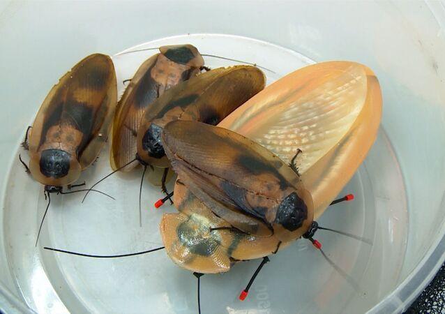 Cucaracha-robot corre a 30 cm por segundo