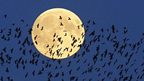 Luna llena - Sputnik Mundo