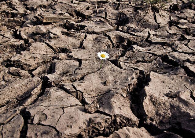 Cauce seco
