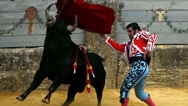 Corrida de toros en España - Sputnik Mundo
