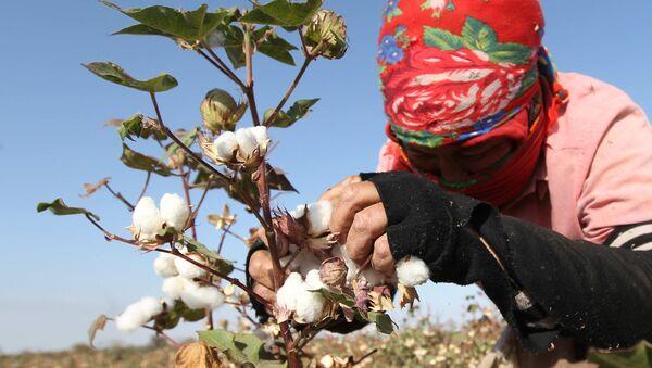 Una mujer recoge algodón - Sputnik Mundo