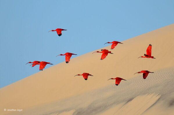 Naturaleza salvaje a través del prisma de los mejores fotógrafos del mundo - Sputnik Mundo
