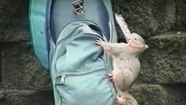 Travesuras inocentes de los animales - Sputnik Mundo
