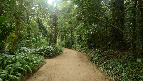 Bosques en Río de Janeiro - Sputnik Mundo