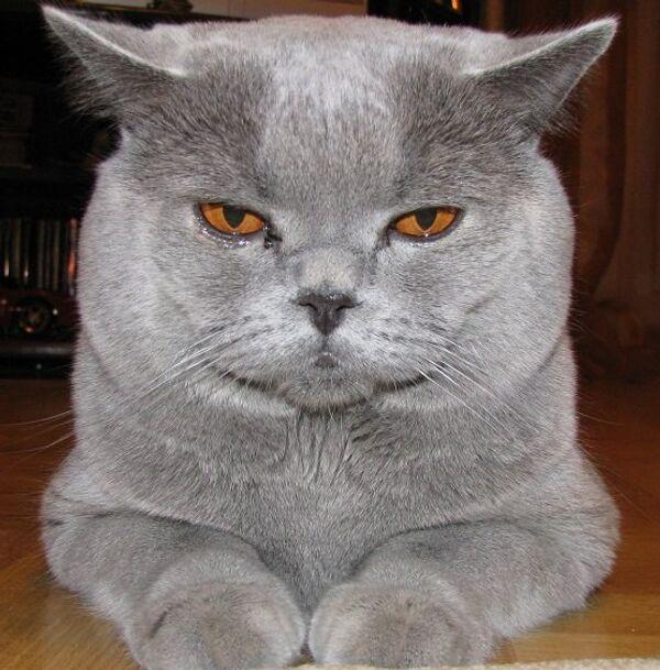 Un gato ayudará a la Policía rusa a prevenir crímenes - Sputnik Mundo