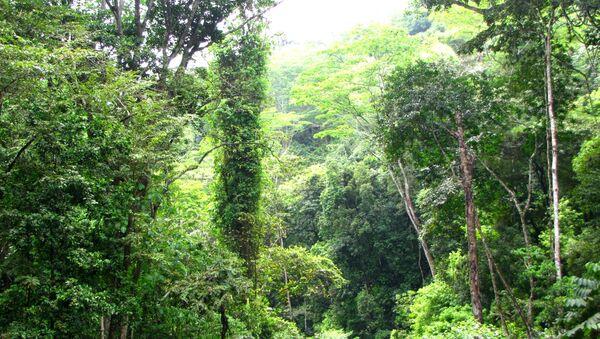 Venezuela debe priorizar la energía limpia y frenar deforestación, dicen expertos - Sputnik Mundo