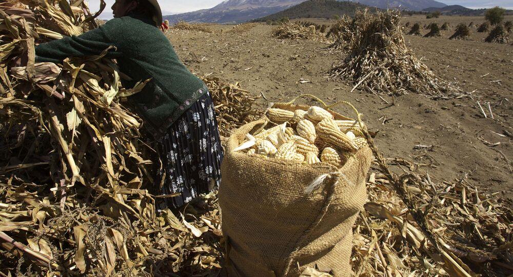 Cultivo de maíz en México
