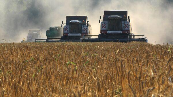 Cosecha de cereales en Rusia - Sputnik Mundo
