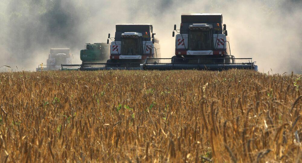Cosecha de cereales en Rusia
