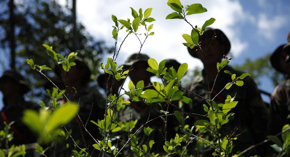 Erradicación de cultivos de coca