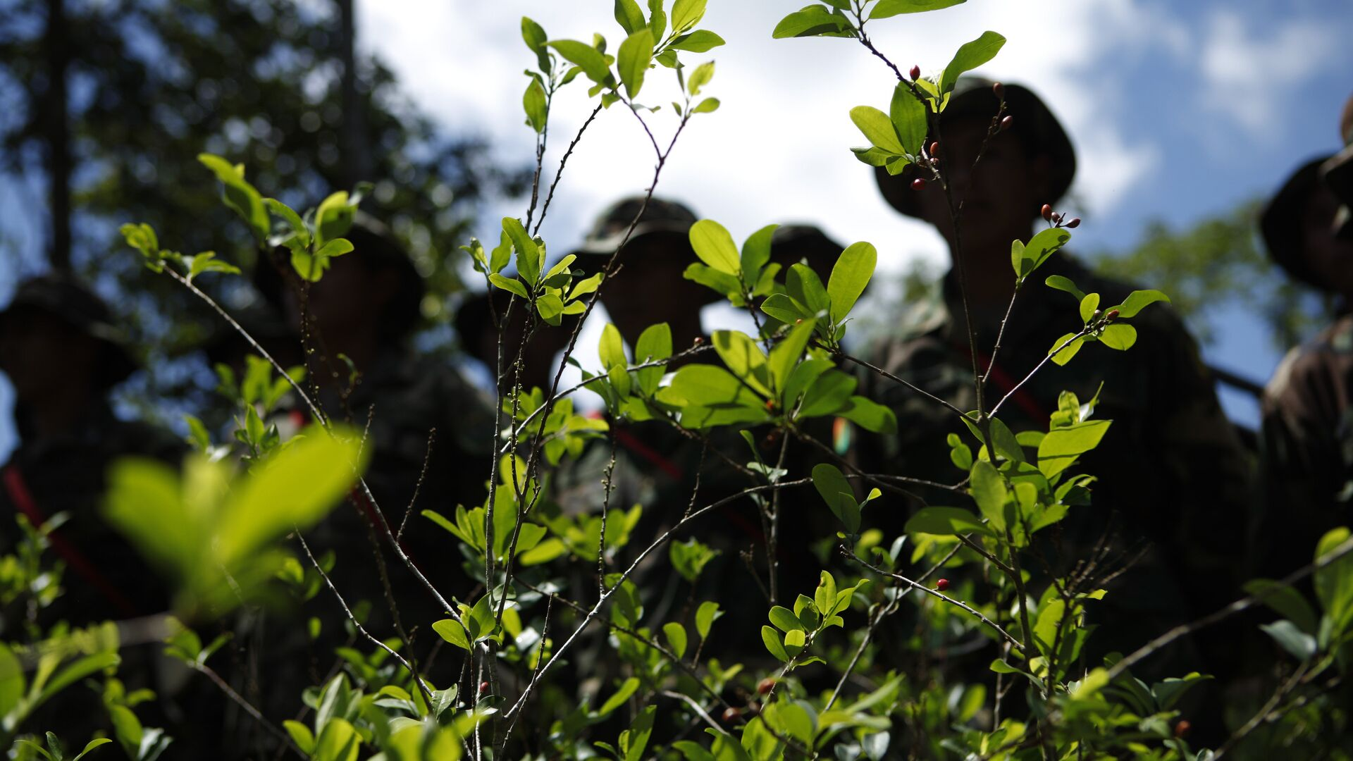 Soldiers stand next to illegally grown coca plants before uprooting them in Paraiso, Bolivia, Monday, Jan. 16, 2012. - Sputnik Mundo, 1920, 20.04.2021
