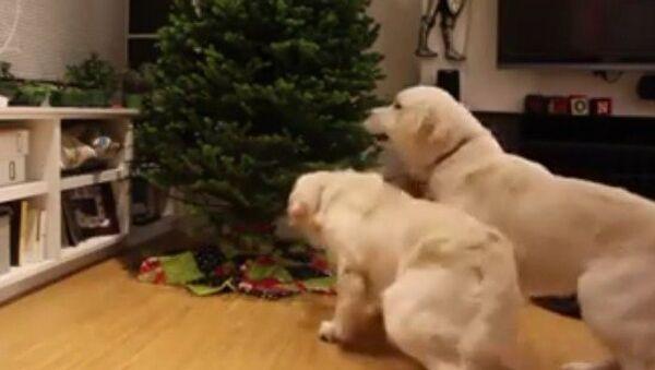 Los labradores y el árbol de Navidad - Sputnik Mundo