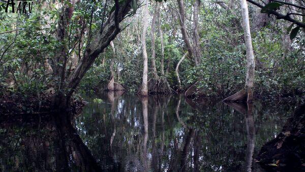 WWF pide a México detener la destrucción de manglares en Cancún - Sputnik Mundo