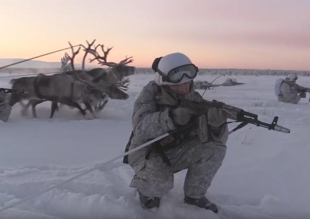 Huskies y ciervos al servicio militar