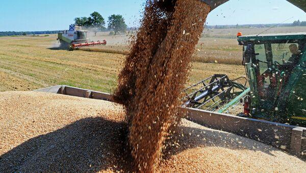 Cosecha de trigo en Rusia - Sputnik Mundo
