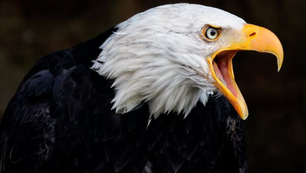Águila - Sputnik Mundo