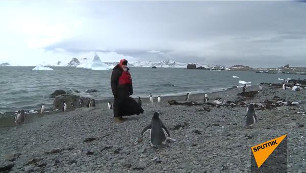 Patriarca Kiril visita a los pingüinos en la Antártida - Sputnik Mundo