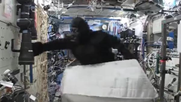 Un gorila causa alboroto en la Estación Espacial Internacional - Sputnik Mundo