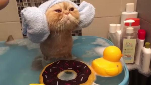 Una gata que sabe apreciar la vida - Sputnik Mundo