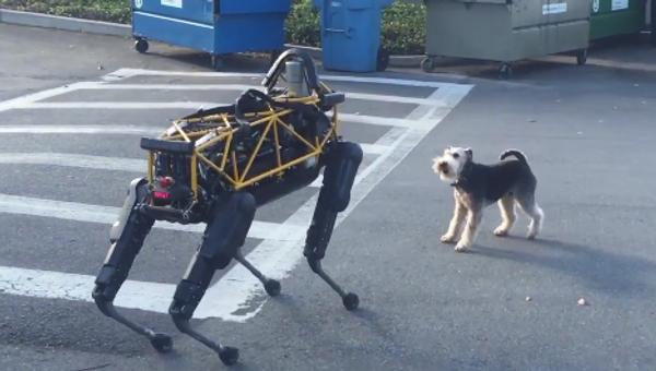 Conflicto entre un perro robótico y uno real - Sputnik Mundo