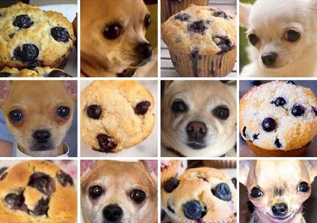 ¿Muffin o chihuahua?