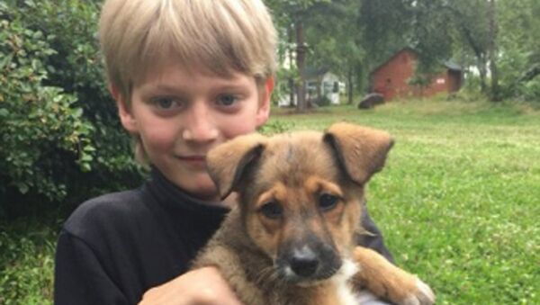 Iván Kurenniy, un niño que salvó a un perro del fuego - Sputnik Mundo