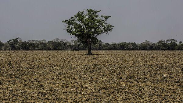 Sequía en Colombia - Sputnik Mundo