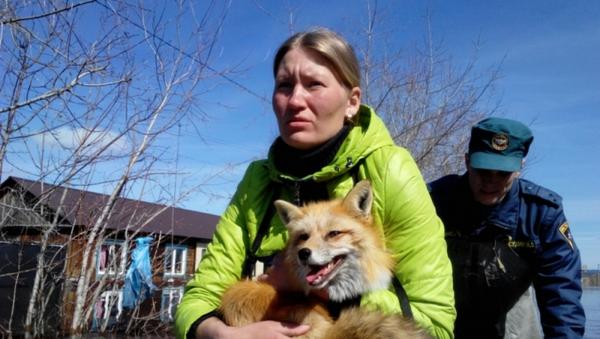 Equipo de rescate evacua a los animales del zoológico en Tiumén - Sputnik Mundo